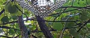 Kronleuchter die am Baum hängt